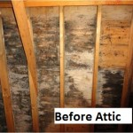 Before attic 1