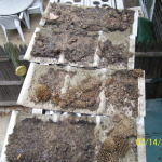 Debris on soffit vents
