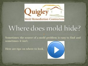 Where Does Mold Hide?