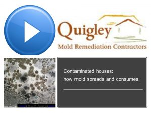 How Mold Spreads