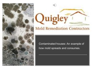 How mold spreads thumbnail